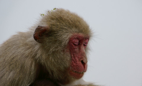 考える猿.jpg